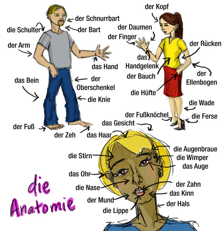 Die Anatomie | English For Life